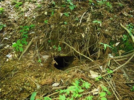 誰の巣穴?
