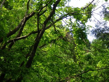 クマ棚の樹