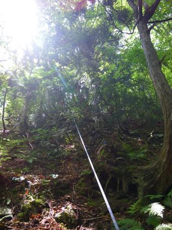 ツキノワグマの棲む森02