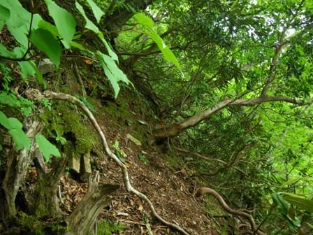 ツキノワグマの生息地の急な斜面