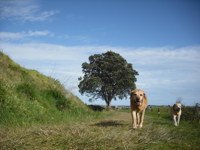 羊の国のラブラドール絵日記NEW!!写真2