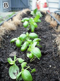 家庭菜園B
