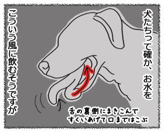 羊の国のラブラドール絵日記10月30日1