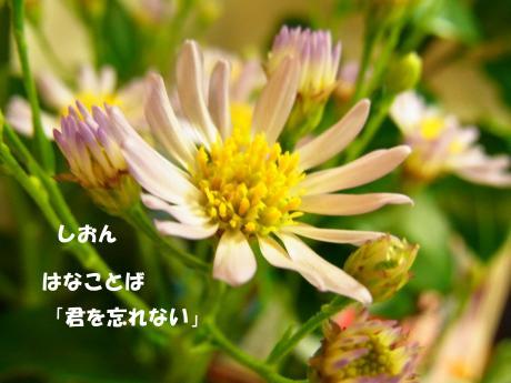 縺励♀繧点convert_20100912005227