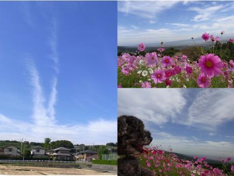 繧ウ繧ケ繝「繧ケ_convert_20101011202741