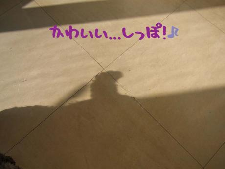 縺励▲縺ス_convert_20101107112647