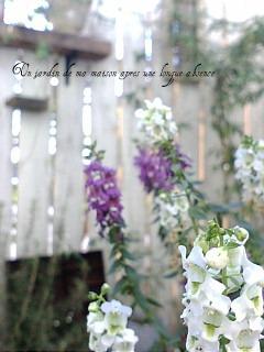 garden09141.jpg