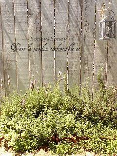 garden26.jpg
