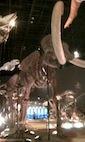 201107_Museum_Mammoth