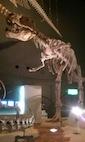 201107_Museum_Tyranno