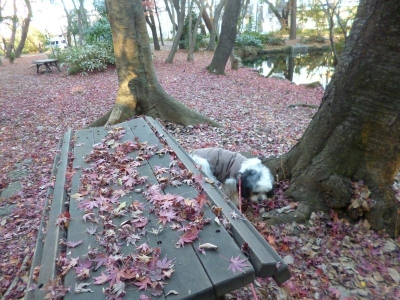 石神井公園20131222