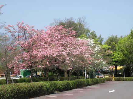 mizuki281.jpg