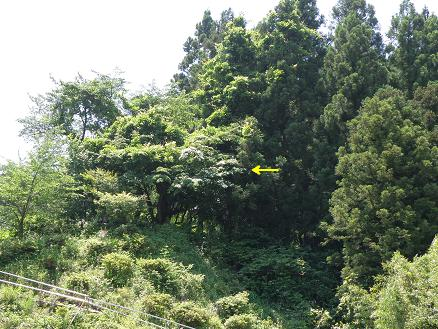 yamabo121.jpg