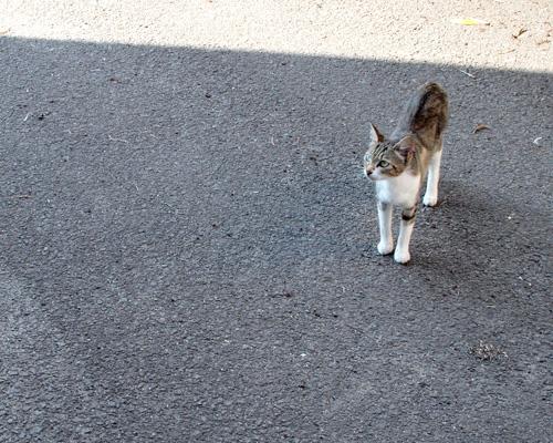 今日もカワイイネコちゃんを紹介いたします(´ー`)ノ