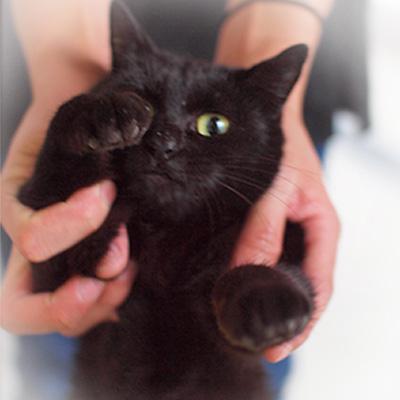 カフェに行くといつも近寄ってきてくれる、 かわいい黒ネコです♪♪