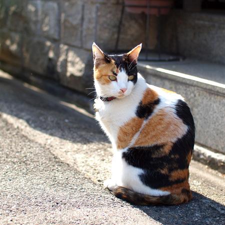 なんて綺麗な顔つきの三毛猫ちゃんっ(*-ω人)♪