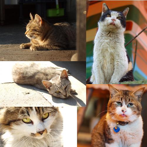 どのネコちゃんも個性たっぷり可愛らしいf(^ー^;