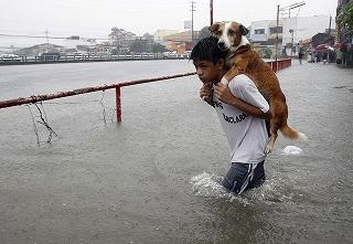 マニラにて、洪水の中 犬を救う少年