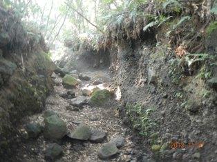 三合目付近の登山道