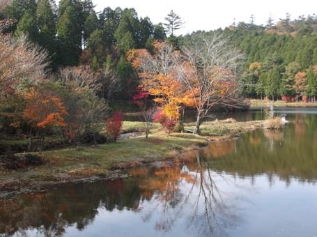 段戸湖~ねびそ岳2013,11,9 001