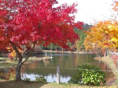 段戸湖~ねびそ岳2013,11,9 005