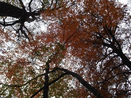 段戸湖~ねびそ岳2013,11,9 015