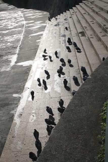 101231 鳩の日向ぼっこ2 W