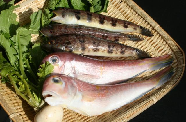 110129 本日の魚 W