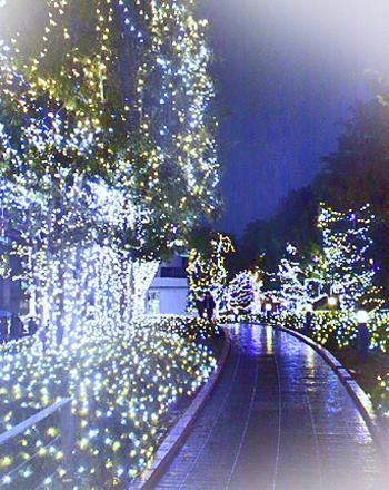 復縁 田巻 クリスマス aa