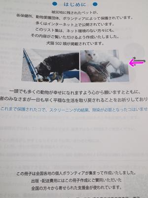 201108053.jpg
