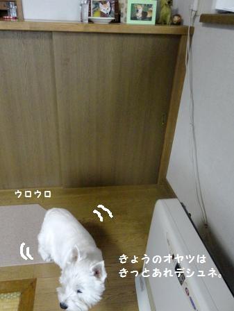 1DSC05223_convert_20141127072845