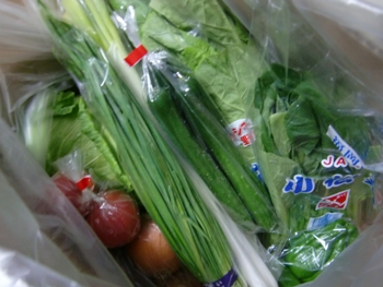 九州の野菜1