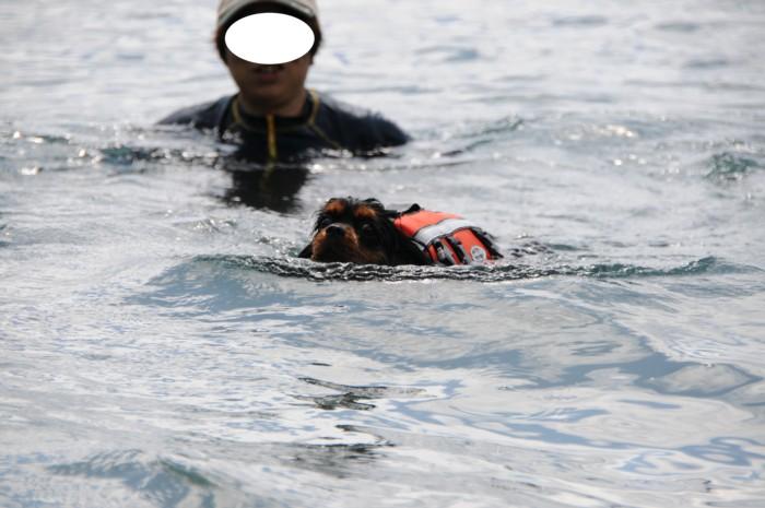 5243こんない深いところで、泳いでるよ~