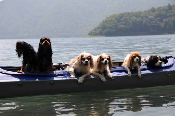5944カヌー犬が揃いました。