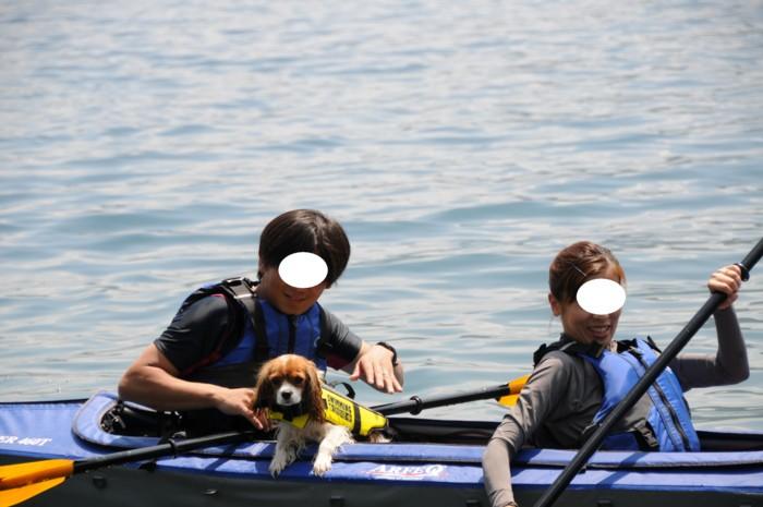6004カヌー犬愛羽。。