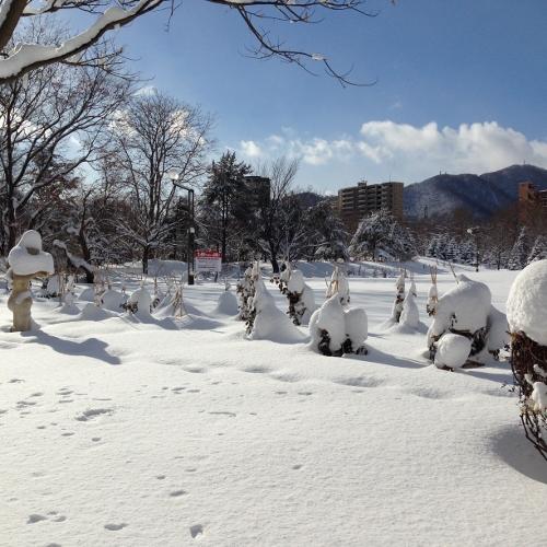 今日の札幌