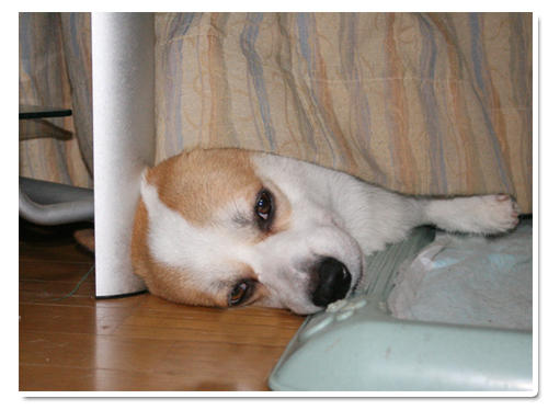 カーテンで寝るリッチ