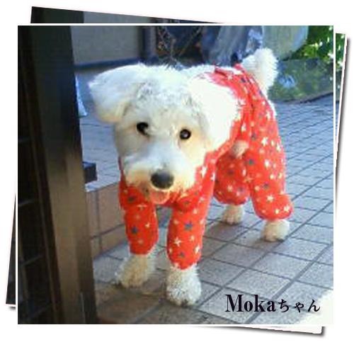 mokaちゃん(赤)