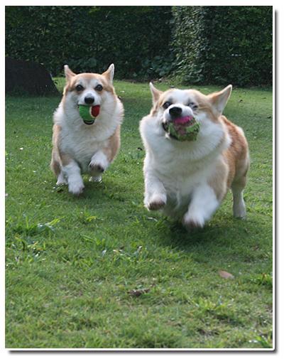 ボールをくわえて2ショット☆走る