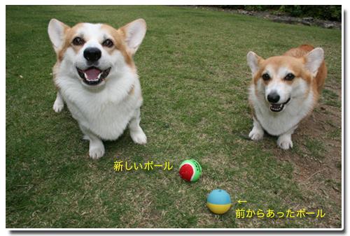 新しいボールボールだよ
