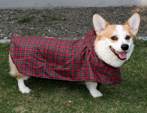 リッチ赤いコート