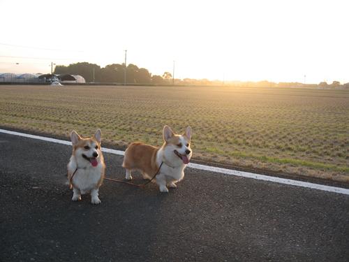2010-1114夕方の散歩3