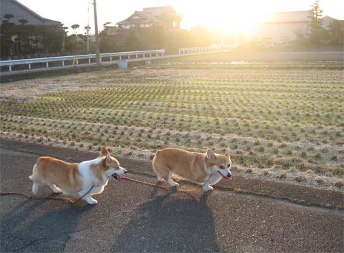2010-1114夕方の散歩4