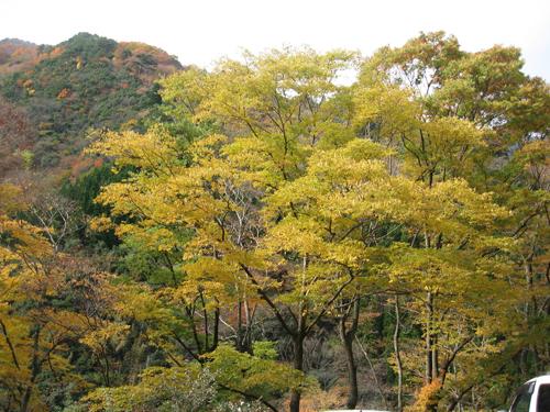 五家の荘の紅葉