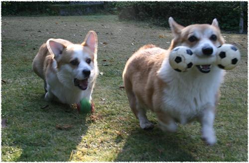 ダンベルとボールで遊ぶ