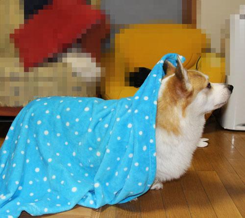 毛布を引きずる