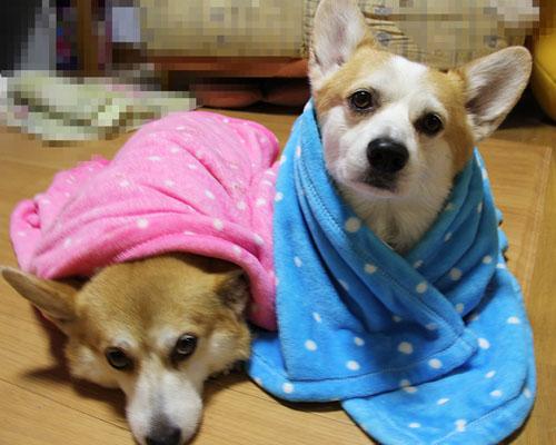 毛布と一緒