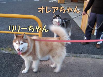 リリーちゃん&オレアちゃん