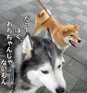 トリュフ&ハナちゃん