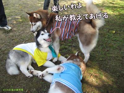 ラスティくん&アンナちゃん&ポトフ